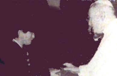 Pápež Ján Pavol II po eucharistickom zázraku dáva Júlii svätý ruženec